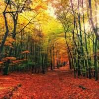 Come enjoy the foliage Fall 2020!